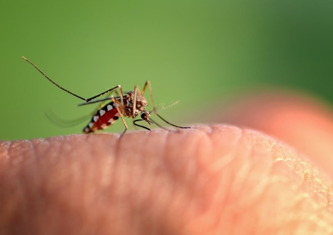 Don't let your guard down! Beware of Dengue too